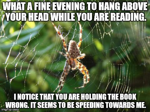 spider meme misunderstood spider meme blank,Misunderstood Spider Meme
